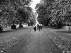 Was it all a dream? (bbusschots) Tags: trees ireland people bw monochrome walking blackwhite path photowalk avenue maynooth hdr pathway topaz kildare photomatix tonemapped tthdr monochromemixer ortoneffect spcm pixelmator topazadjust