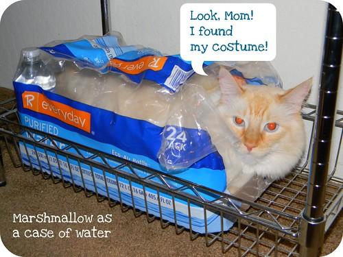 Marshmallow's Halloween Costume