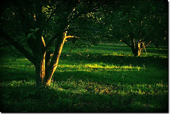 Garden (seyed mostafa zamani) Tags: life park camera new city light sunset sun color tree green art love nature colors beautiful beauty look night canon garden landscape happy photography eos hope leaf nice colorful asia angle iran background arts azerbaijan iso vision dreams iranian mm concept bent conceptual sec  2010  lovly            azarbaijan azarbayjan   eos450d  450d   marand    natvryalyst