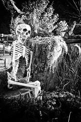 Lawyers After Hours! (Baab1) Tags: flowers autumn blackandwhite bw fall halloween monochrome death eyes nikon relaxing haunted creepy spooky ribs bones ghosts lawyers skeletons autumnfest d300 homesteadgardens gardencenters 1755nikkor induro davidsonvillemd annearundelcountymaryland markinsballheads