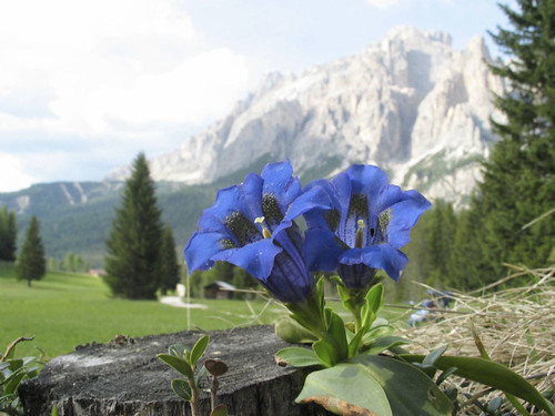 Alta Badia - estate