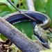 daniel cowan snakes
