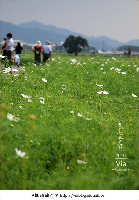 【新社花海】新社花海2010~via拍回來的最新花況9