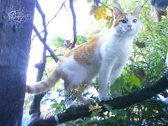my cat ツ (Bonny Villegas) Tags: autumn cat gato otoño uva grape
