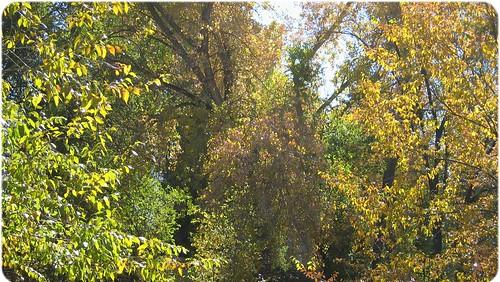 spring_ck_falltrees