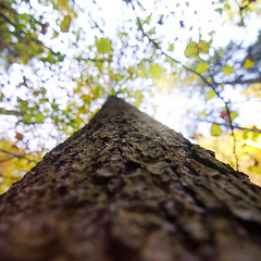 bokey toki :) (Zbojniiik) Tags: autumn tree colors square lens bokeh wide tokina pro 11mm ultra f28 116 creamy dx atx 1116mm
