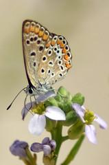 menorca Butterflies (markcann1) Tags: macro butterfly dragonfly wildlife sony insects alpha menorca