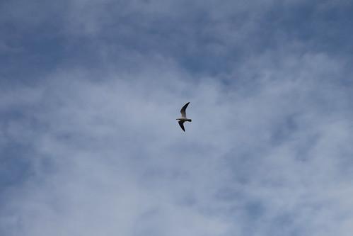 鳥が飛んでた
