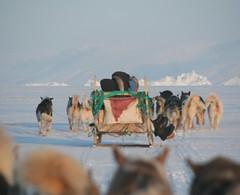 IMG_5160 (Mark Parsons) Tags: dog snow ice team tracks greenland iceberg sled sleddog dogsled andymahoney ssiii avannaa