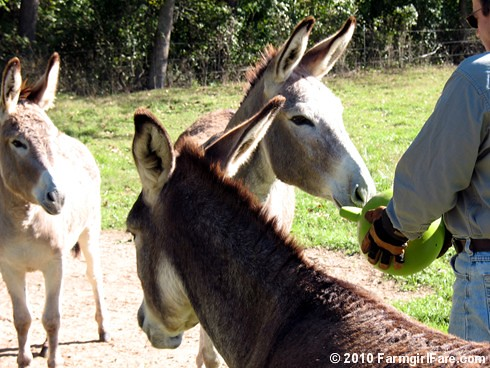 Donkey Ball 4