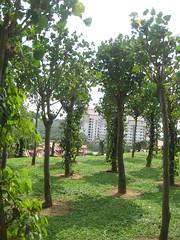 Holiday in Kuala Lumpur Malaysia 1 298 (tom1941) Tags: coffee rice herbs rubber mango malaysia durian cocoa jackfruit palmoil rubberprocessing agriculturemalaysia