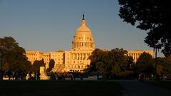 Capitol under golden light