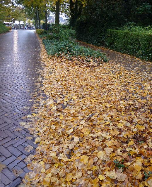Bladeren in Bergen