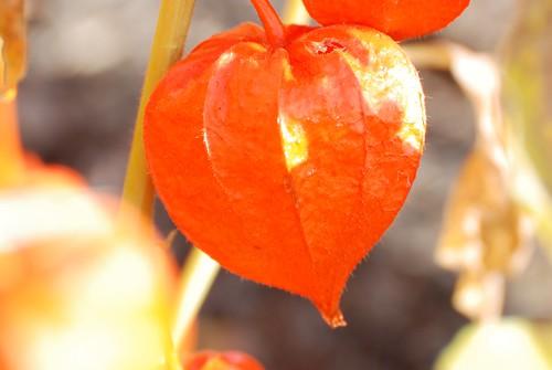 orange-f11