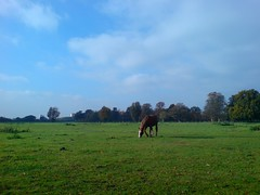 Green Green Grass of Home (leszee) Tags: park uk horse green home grass nationaltrust middlesex hounslow animalia osterley isleworth greengreengrassofhome equidae domestichorse osterleyparkandhouse londonboroughofhounslow jerseyroad