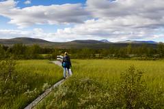 Hiking in Fokstumyra (Ggranvik) Tags: mountains norway trekking landscape norge hiking path dovre trail naturereserve marsh nor sti fjell dovrefjell landskap myr naturreservat oppland