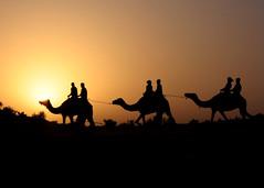 Sunset Camel Ride (jet.jpg) Tags: sunset dubai ride desert uae camel silouhette stunningskies bestcapturesaoi elitegalleryaoi blinkagain bestofblinkwinners galleryoffantasticshots blinksuperstars flickrstruereflection2 flickrstruereflection3 flickrstruereflection4 flickrstruereflection5 flickrstruereflection6 flickrstruereflection7 flickrstruereflectionexcellence trueexcellence1 trueexcellence2 trueexcellence3 rememberthatmomentlevel4 rememberthatmomentlevel1 rememberthatmomentlevel2 rememberthatmomentlevel3