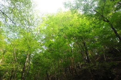 カンカケ谷は緑にあふれていた