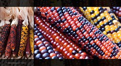 Indian corn (marianna a.) Tags: red food orange brown canada black colour detail macro fall texture halloween yellow beads interesting healthy eyes corn shiny pattern quebec decorative extreme grain harvest dry vegetable panasonic explore glossy earthy rows pasture round feed edible maize wholesome montral kernels autunm kob explored macromondays lumixg1 mariannaarmata