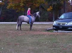 Horse and Bareback Rider