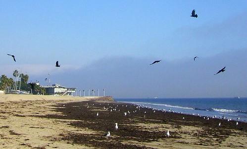 Ledbetter Crows 3