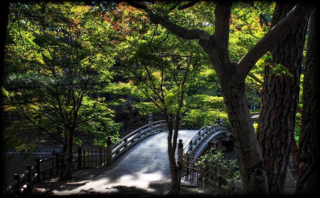 Leaves Over Taikobashi Bridge