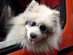 [フリー画像] 動物, 哺乳類, イヌ科, 犬・イヌ, 201011221100