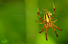 Spider (  || WALEED PHOTO) Tags: spider photo nikon waleed d300