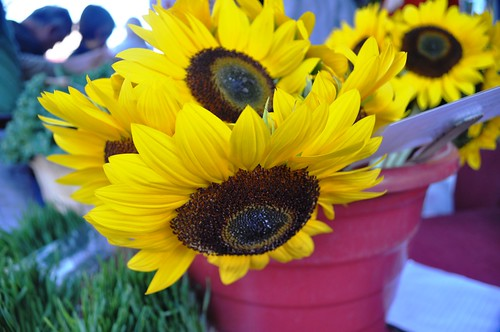 Wordless Wednesday: Sunflowers in Sarasota