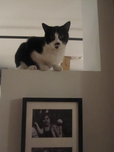 Kiki the climber