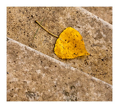 automne (1) (Marie Hacene) Tags: feuille automnefeuille