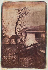 """Back Yard"" (jrlarimer) Tags: gum gumbichromate contactprint digitalnegative altprocess gumprint"