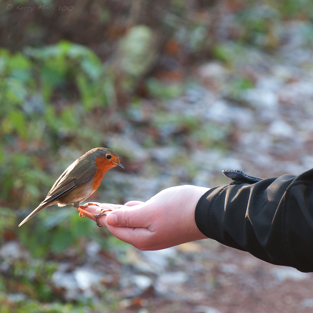 A bird in the hand....