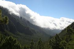 The Forest of the Gods (rvr) Tags: lapalma lacumbrecita lices0000043