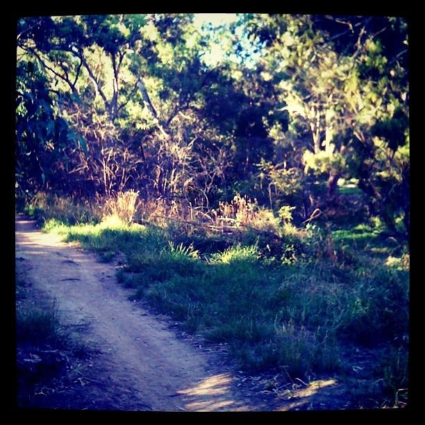 More singletrack through the Rosanna Parklands, less than 1km from my doorstep.