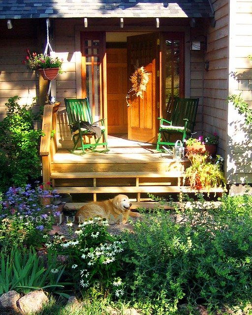 an inviting front porch next to a perennial garden full of summer flowers and a golden retriever dog basking in the warm light.