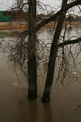 Submerged! (Cindy's Here) Tags: trees canada canon river flooding winnipeg flood branches manitoba redriver warehouses