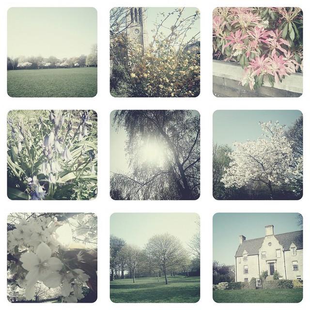 park in bloom
