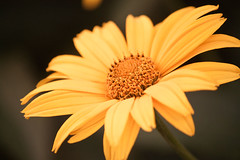 (Barbara.K) Tags: nature flower dof differentialfocus canonrebelt1i canon500d canonefs55250mm alienskinexposure