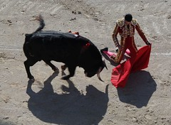 Stierkampf in Arles (uwe20) Tags: frankreich arles arena stierkampf stier torero sonne
