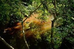 Pooh Sticks environment (smcnally24601) Tags: winnie pooh 100 acre wood sticks bridge country woods walk east sussex england britain british english summer landmark