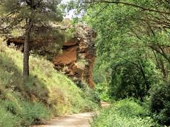 Camino de Vozmediano (Eduardo OrtÍn) Tags: arbol senderismo camino vegetación naturaleza