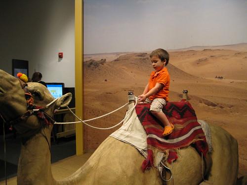 Finn rides the camel