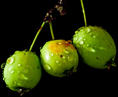Crabapples (NinjaWeNinja) Tags: green nature water droplets simplicity hanging apples waterdroplets crabapples