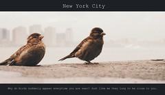 Close to you (Sophe's World) Tags: city newyorkcity music cinema newyork birds newjersey quote grain hudsonriver picnik closetoyou thecarpenters