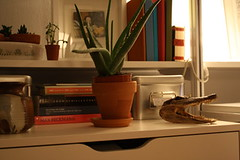 aloeandhead (GoodAfternoonan) Tags: studio aloe apartment bookshelf taxidermy therapy apartmenttherapy apartmenttherapyny rakks