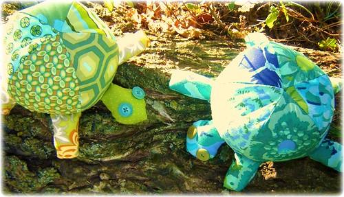 Tortoise 021