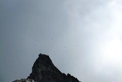 tons and tons of little birds.. (iwona_kellie) Tags: friends summer snow canada rock britishcolumbia anniversary rocky glacier celebration summit scramble cypresspeak roecreek squamishcheakamusdivide 2083meters returnafter4years