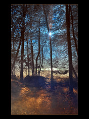 A Day in the Forest (guenterleitenbauer) Tags: au aulandschaft landschaft ir infrarot wasser water fluss river creek bach feuchtgebiet wald forest wood sun sonne 2010 animal animals austria guenter gnter landscape leitenbauer obersterreich tier tiere tiergarten zoo bild bilder flickr foto fotos gunskirchen g image images infrared photo photos picture pictures traun wildpark wwwleitenbauernet zoos sterreich