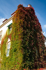 (Tomas Taylor) Tags: autumn fall colors vines